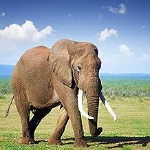 Yeele 6x6ft Elephant Backdrop Africa Grassland Wildlife Animal Safari Zoo Background for Photography Outdoors Scenery Kid Adult Photo Booth Shoot Vinyl Studio Props