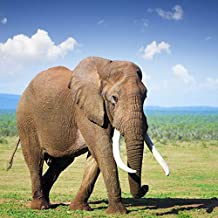 Yeele 8x8ft Elephant Backdrop Africa Grassland Wildlife Animal Safari Zoo Background for Photography Outdoors Scenery Kid Adult Photo Booth Shoot Vinyl Studio Props