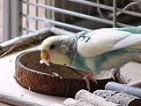 Sitzbrett mit Kokosschale Futternapf zum Herausnehmen - 8