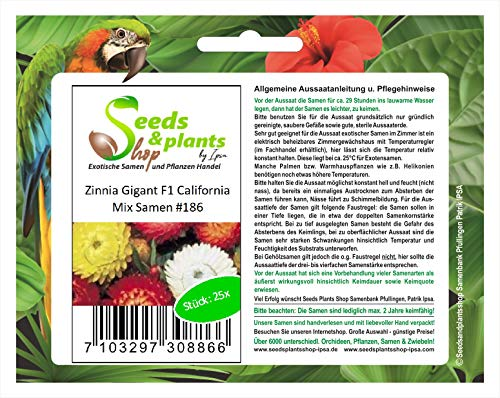 Stk - 25x Zinnia Gigant F1 California Mix Blumen Pflanzen - Samen #186 - Seeds Plants Shop Samenbank Pfullingen Patrik Ipsa