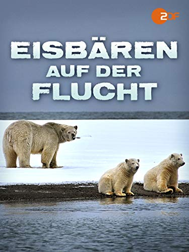 Eisbären auf der Flucht
