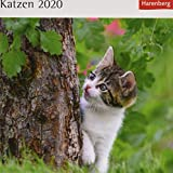 Katzen Postkartenkalender 2020. Wochenkalendarium. Blockkalender. Format 16 x 17,5 cm - Harenberg