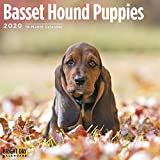 📅 STAY ORGANIZED: 2020 Basset Hound Puppies Calendar! Basset Hounds were originally bred with impeccable scent for hare hunting. The name Basset originates from the French word 'bas' which means low, referring to their short legs and low body. Basset...