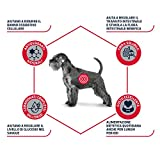 Zoom IMG-2 advance veterinary diets diabetes 12