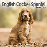 English Cocker Spaniel Puppies Mini Square Wall Calendar 202