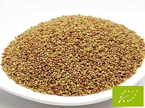 pikantum Bio Alfalfa | 1kg | Keimsaat für Sprossen | 99,9{8436d4398be4ed3d14ba14515f3fa3c523deb1ea82ea5079fb0eb240b3f379fc} Reinheit | erstklassige Keimfähigkeit