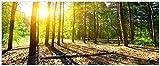 Wallario selbstklebendes Poster - Sonnenstrahlen tief