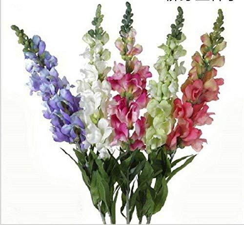 XINDUO Mehrjährig Blumen,Vier Jahreszeiten Landschaftspflanze Salix sibiricum Blumensamen-500g,Blüten Saatgut mehrjährig