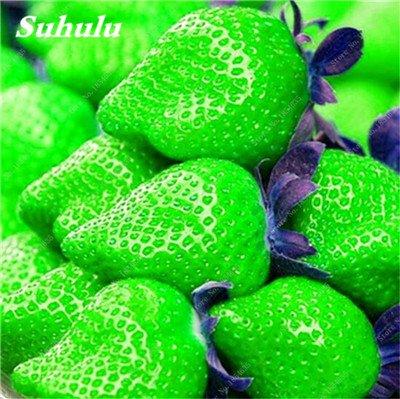 Big Promotion! 1000 Pcs Four Seasons en pot Graines Strawberry Super Sweet Seeds fruits Bonsai plantes Semences Maison et Jardin 17