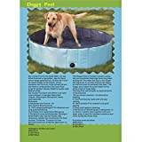 Hunde Swimmingpool - 8