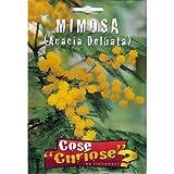 MIMOSA (Acacia Delbata) - SEMI