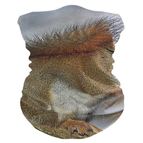 Stoff-Gesichtsmaske für Damen, multifunktional, Bandanas, Schnittmuster, unisex, rotes Eichhörnchen, Nagetier-Maske, bedruckbar, für Herren und Damen, Kopfbedeckung, Gesichtshandtuch, waschbar