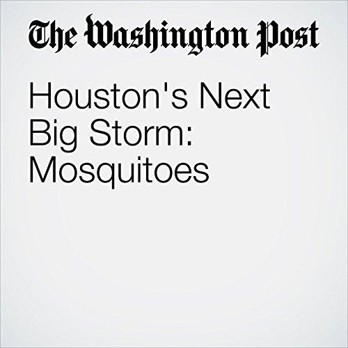 Houston's Next Big Storm: Mosquitoes copertina