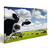 Bild Bilder auf Leinwand Lustige Kuh Blickt in die Kamera