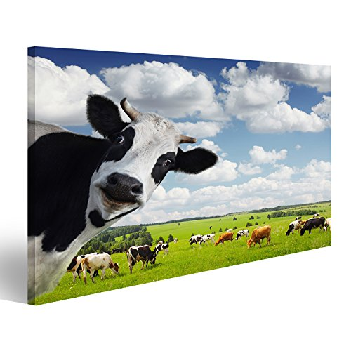 Bild Bilder auf Leinwand Lustige Kuh Blickt in die Kamera auf grüner ländlichen Wiese Wandbild Leinwandbild Poster