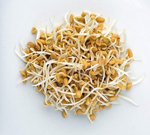 Alholva - semillas germinadas -