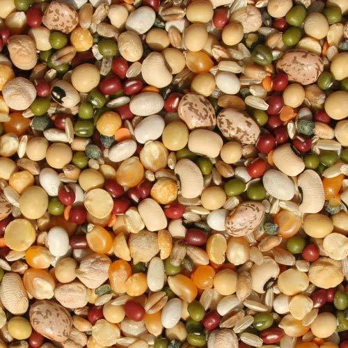 Tidymix Pulse & Reis Einweichen von Papageienfutter