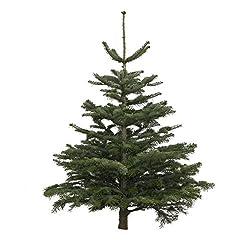 wie lange w chst ein weihnachtsbaum gr. Black Bedroom Furniture Sets. Home Design Ideas