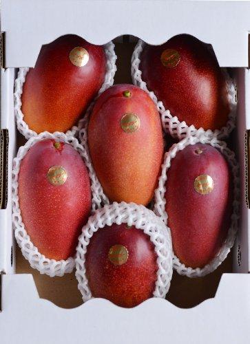 減農薬 マンゴー 太陽の子 お徳用 A品 大玉 6玉 約2.2kg〜2.4kg入 贈答用 ギフト 宮崎 産地直送 5h