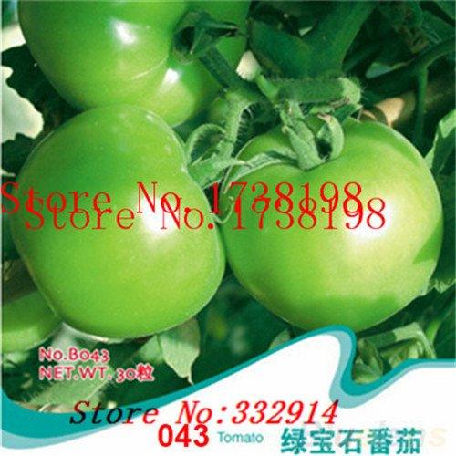 Vente! 100 Italian Arbre Tomato * de HEIRLOOM RARE !! * Graines GRAINES végétales TOMATE DE LA VIE GIANT TREE