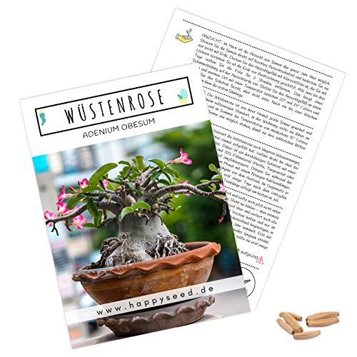 Exotische Kakteen Samen mit hoher Keimrate - Sukkulenten Samen Set für deinen eigenen wunderschön blühenden Kaktus (1x Wüstenrose)