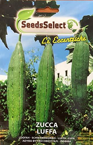 Semi Zucca Luffa Cylindrica Zucchina Rampicante Spugna Vegetale