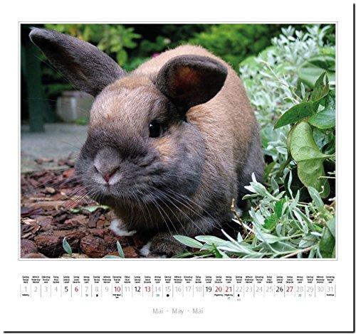 KANINCHEN: Original Stürtz-Kalender 2018 – Mittelformat-Kalender 33 x 31 cm - 7
