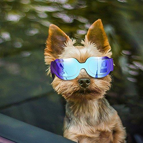 Futureyun Kleine Hunde-Sonnenbrille – Hundebrille für UV-Schutz Sonnenbrille Winddicht mit verstellbarem Band für Welpen, Hunde, Katzen