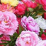 TOYHEART 100 Piezas De Semillas De Flores De Primera Calidad, Semillas De Peonía, Plantas Florecientes De Suffruticosa, Plántulas De Plantas Florales En Macetas Perennes Para Jardín Rosa
