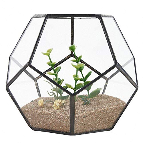 Zwart glas Pentagon geometrische terrarium Container vensterbank Decor bloempot, zwart