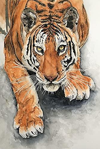 Xykhlj Pintura por numeros con por numeros - Tigre de Color Animal - Lienzo preimpreso - DIY Painting Adultos - cumpleaños Bodas día de Navidad decoración - 30x50cm - Sin Marco