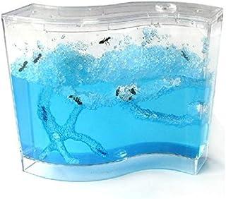 Tutoy Hormiga Granja Hormigas Trabajo Hormiga Palacio Ant
