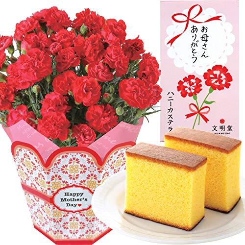 赤カーネーション5号鉢 文明堂カステラ 花とスイーツ 花鉢 母の日ギフト