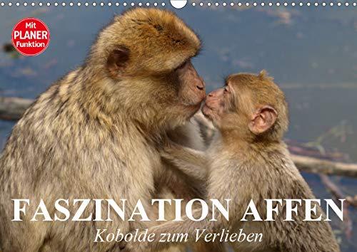 Faszination Affen. Kobolde zum Verlieben (Wandkalender 2020 DIN A3 quer)