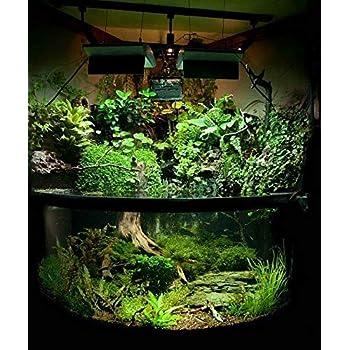 Vajra seeds Aquarium Mixed Plants 100 Seeds and Random Aquatic Water Grass -200 Seeds Packet