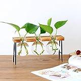DEDC Jarrón de vidrio de escritorio con soporte de madera maciza retro para plantas hidropónicas, jardín, decoración de boda (3 bombillas)