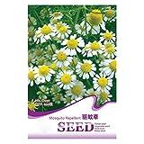 philsp semi repellenti per zanzare semi di piretro alla vaniglia, piante fiori bonsai giardino 1 confezione repellente per zanzare