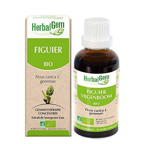 HerbalGem - Figuier Bio - Macérat-Mère de Gemmothérapie Concentrée - Ficus Carica gemmae - Le bourgeon de la détente - 15 ml