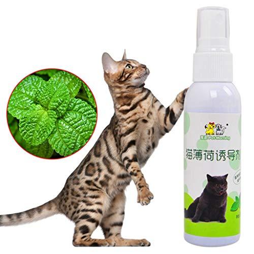 Juguete de entrenamiento para gatos, gatos, menta natural y saludable, juguete para rascar