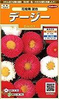 サカタのタネ 実咲花7330 デージー 花壇用混合 00907330