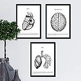 Nacnic Set de 3 posters de anatomía en blanco y negro con imágenes del cuerpo humano. Pack de láminas sobre biología y medici con 'Corazón, Cerebro y Pulmones'. Tamaño A4. Sin Marco.