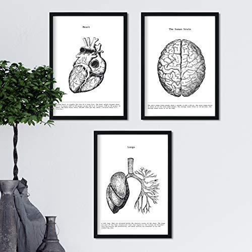 Nacnic Anatomie Poster 3er-Set. Vintage Stil Wanddekoration Abbildung von Herz Gehirn Lunge und andere Körperteile. Verschiedene menschliche Körper und Anatomie Bilder ohne Rahmen. Größe A4.