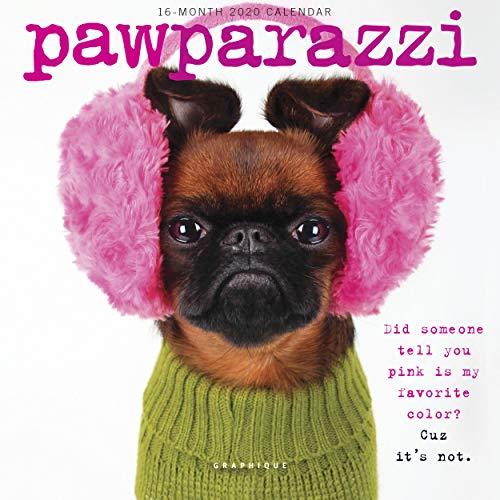 Graphique Pawparazzi Mini Wall Calendar, 16-Month 2020 Wall Calendar with Cute Dog Photographs, 3 Languages & Major Holidays, 2020 Calendar, 7' x 7'