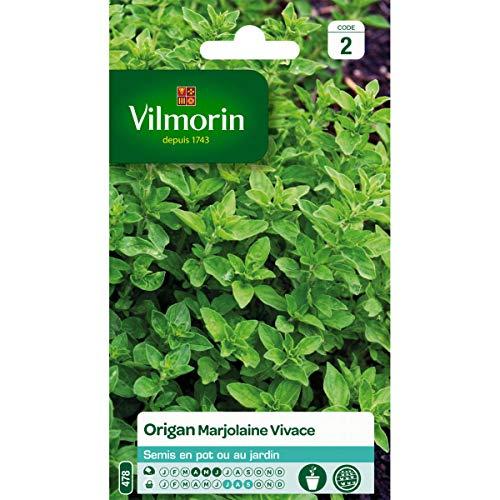 Vilmorin - Sachet graines Origan Marjolane Vivace