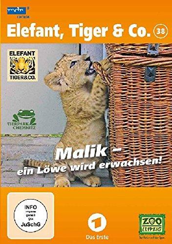 Elefant, Tiger & Co. - Teil 38: Malik - ein Löwe wird erwachsen! [2 DVDs]