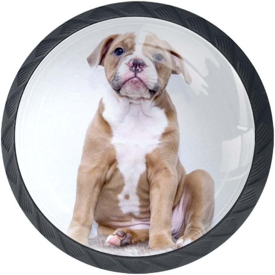 TIKISMILE Puppy Bulldog Drawer Knob Handle Ergonomic Chicago Mall 35mm 25% OFF Pull C