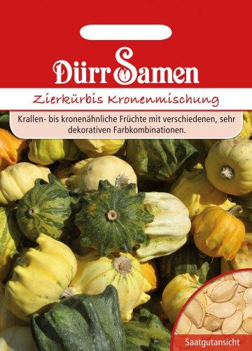 Dürr Samen 1803 Zierkürbis Kronenmischung (Zierkürbissamen)