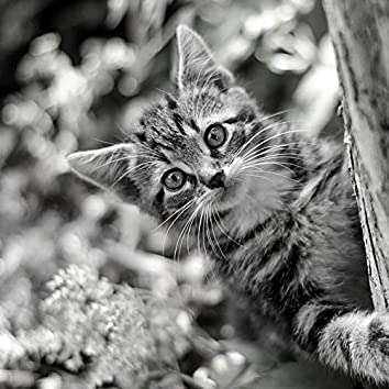 掃除-子猫