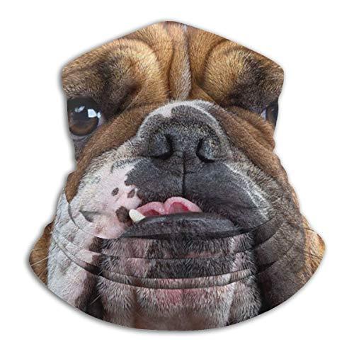Winter Face Mask Bandana for UV Protection, Men Women Neck Warmer Cover Beanie Cap for Cycling Running, Cute Bulldog Dog Ear Muffs Scarf Wrap Gift
