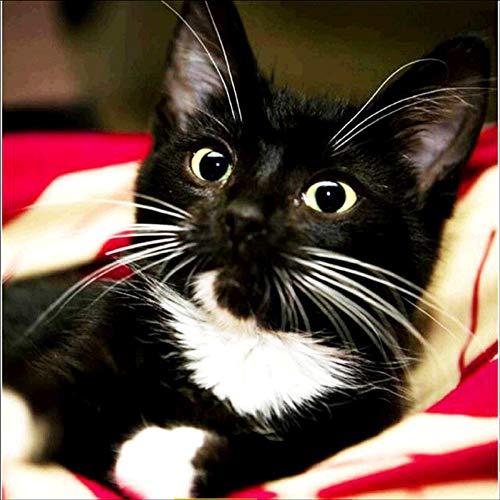 DIY 5D Diamant Gemälde Malen nach Zahlen,5D Malerei Diamant kinder schwarze Katze mit Strass-Steinen, Diamanten Painting Kreuzstich Kunst Handwerk, Leinwand, Wanddekoration, 30 x 30 cm